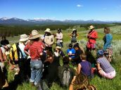 A plant walk with Sevensong at the Montana Rainbow Gathering.