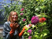Ona and what I would consider about the biggest zinnia I have ever seen! We are in the greenhouse of Robyn Klein, an herbalist and educator I have long wished to meet. She is growing many lovely plants on her land outside Bozeman, MT. It was a pleasure to make her acquaintance!