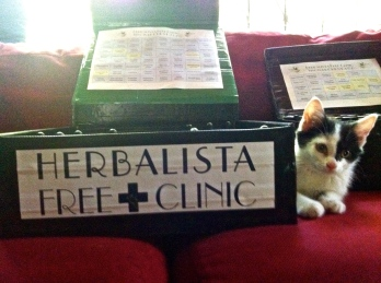 Chloe (newest member of the Herbalista crew) guarding the herbs as we pack up our mobile tincture kits.